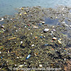 Litter in the harbour at Carrickfergus, County Antrim