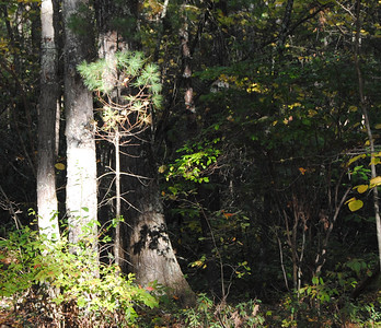 Townsend State Forest