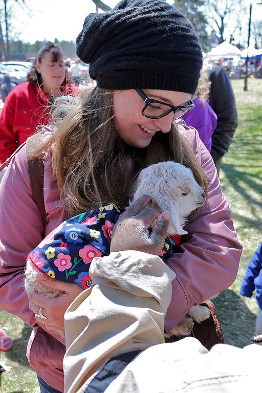 . Bekah Casey, 28, from Fitchburg got to hold a four day old goat on the Townsend common Saturday during Townsend\'s Earth Day event. SENTINEL & ENTERPRISE/JOHN LOVE