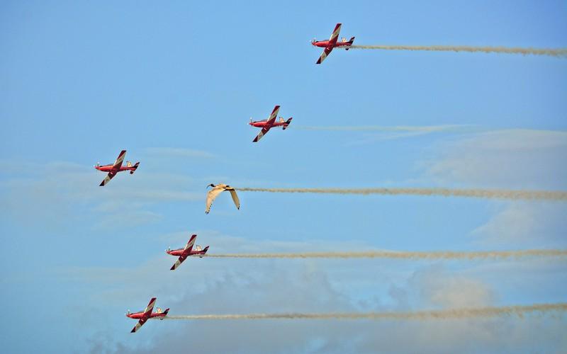 RAAF Roulettes.