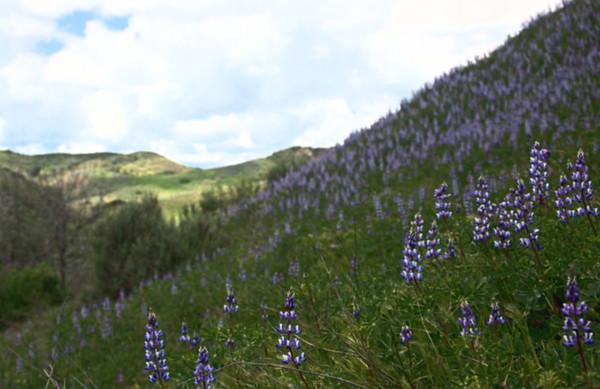 """Towsley Canyon """"Spring"""" California"""
