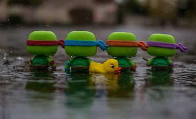 Turtlehood