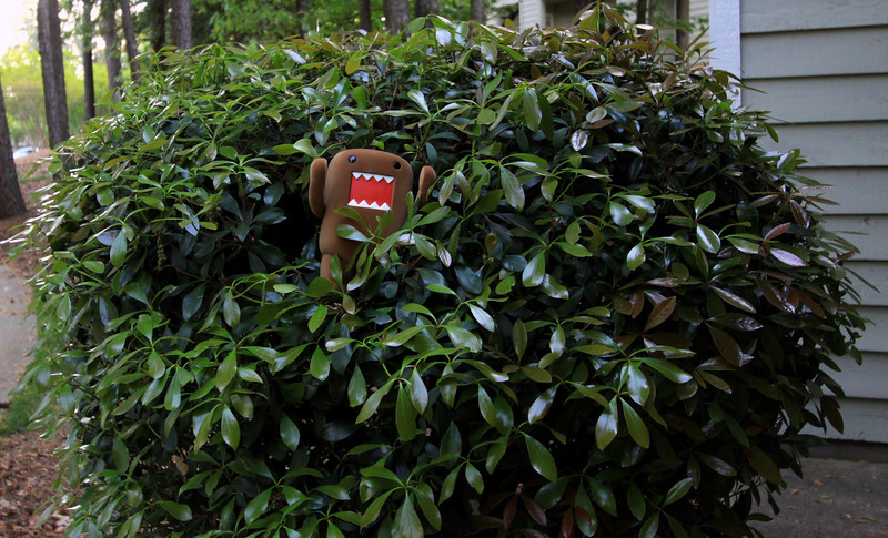 (17.04.2010) Day 107-Domo thought it would be funny to jump out of the bush yelling RAAAR!!! Obey the DOMO!!!..you should have seen the look on that old lady's face...