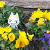 03.06.2010 Day 65 #365 Project- Toro thinks spring is for pansies!