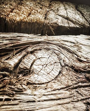 Blooming Wood