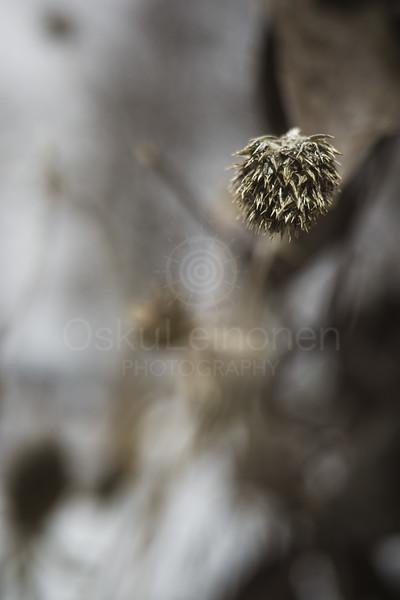 Winter Plants VII