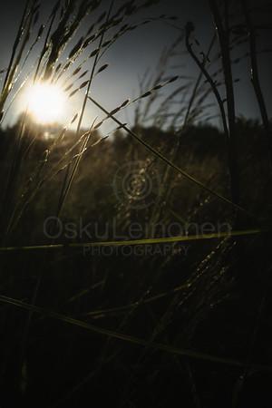 Warm Summer Days X (Silhouette)