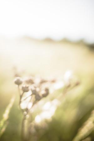 Warm Summer Days IX (Scorching Sun)