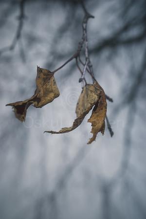 Winter Still Life VII (Tree)