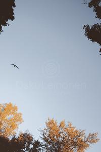 Flying On The Sky I