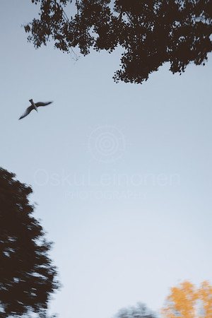 Flying On The Sky II