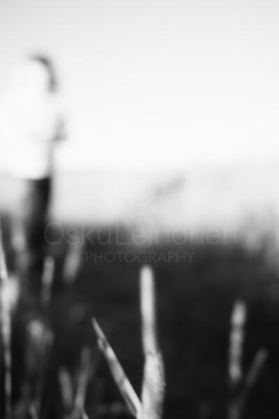 Warm Summer Days XIX (Monochrome Silhouette)