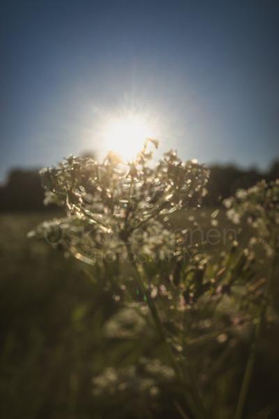 Warm Summer Days XI (Glimmering)