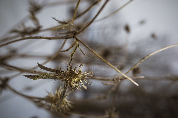 Winter Plants IV