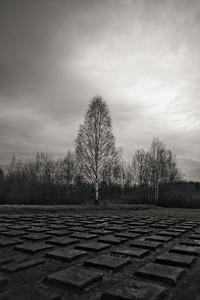 Urban Tree II