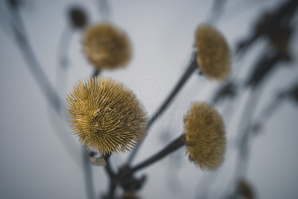 Winter Still Life X (Flower)