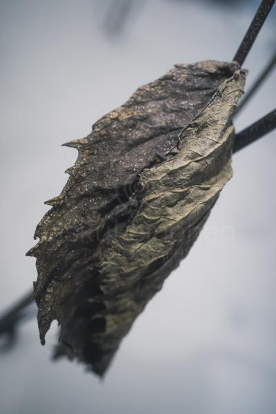 Winter Still Life XII (Leaf)