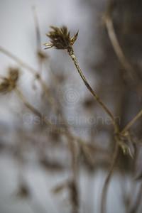 Winter Plants V