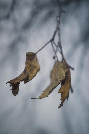 Winter Still Life VIII (Tree)