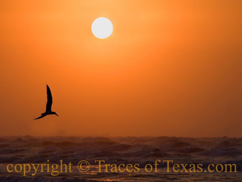 Sunrise Seagul