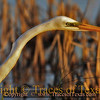 Title:   If You Need Me, I'll be Over by the Egret<br /> <br /> Comments: <br /> <br /> Location: Anahuac National Wildlife Refuge