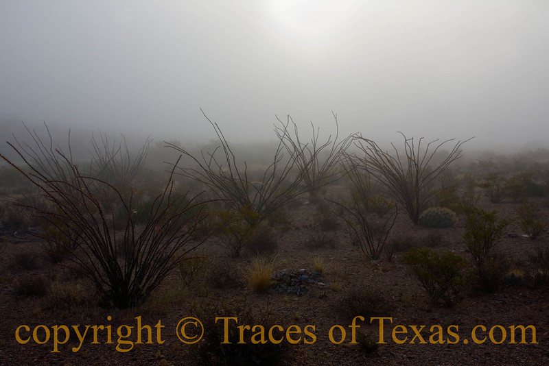 Title:   Time to Forgive the Imperfections of the Earth<br /> <br /> Comments: I really wish ya'll could have been there to see this in real life. Oh it's a nice enough image, I guess,  but the sound of the fog moving over the earth and through the Ocotillo is something that just can't be conveyed via pixels. <br /> <br /> Location: West Texas