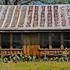 "Title: Longing on a Large Scale is What We Call History  <br /> <br /> Comments: With its weathered hitching posts and prickly pear cacti, the Cherry Springs dance hall in Cherry Springs is a classic slice of Texas. It was built in 1890 by a German-American named Hermann Lehman. As an eleven year old boy, Hermann was kidnapped by Mescalero Apaches. For the next nine years, he lived with the Indians, gaining warrior status. Later, he joined famed Comanche Chief Quanah Parker before finally returning to his sisters and mother and his former life in white society.<br /> <br /> The list of those who have performed at Cherry Springs reads like a ""who's who"" of country music: Hank Williams, Patsy Cline, George Jones, Willie Nelson, Bob Wills, Buck Owens, Ray Price, Ernest Tubb, Marty Robbins etc... Heck, even Nat King Cole played there.<br /> <br /> But probably the most famous of all was Elvis Presley, in 1955. Elvis was an unknown, however, and was mistakenly listed on the advertising handbill as ""Clovis Presley.""<br /> <br /> Like many shrines hereabouts, it has fallen into disrepair. However, it was recently purchased by a man who is going to refurbish it. And once more will the music spill out of the doorways and tickle the prickly pears. .<br /> <br /> Location: Cherry Springs"