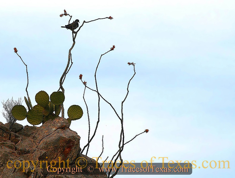 Title:   One Mile High<br /> <br /> Comments: <br /> <br /> Location: Guadalupe Mountains National Park