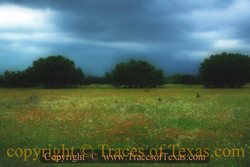Title:  Flowers Shivered Near the Center of a Tree. She Loved Clouds Because Clouds Loved Me. <br /> <br /> Comments: Cold front coming in. <br /> <br /> Location: Georgetown, Texas