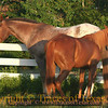 Title:   Horse Whispering<br /> <br /> Comments: <br /> <br /> Location: Katy