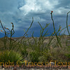 Title:   Ocotillo Dance <br /> <br /> Comments: One of the weirdest days, atmospherically, that I have ever been out on. <br /> <br /> Location: Chinati Mountains