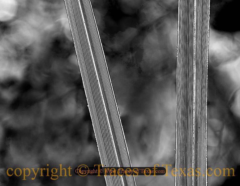 Title:   Swamp Abstraction<br /> <br /> Comments: <br /> <br /> Location: Aransas National Wildlife Refuge