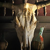 Title:   Still Life in Dead Cow<br /> <br /> Comments: <br /> <br /> Location: Brackettville