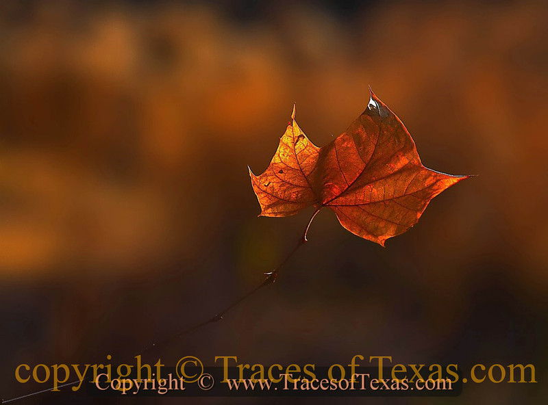 Title:   Floating<br /> <br /> Comments:  With winter closing in ....<br /> <br /> Location: Colorado Bend State Park