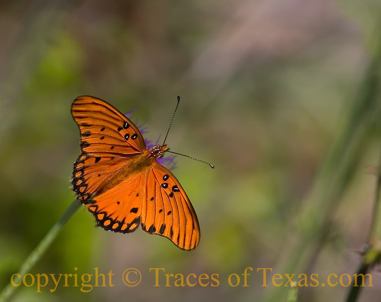 Title: A Butterfly is a Self-Propelled Flower<br /> <br /> Comments:  I did not know if I was a man dreaming that I am a butterfly, or whether I was a butterfly dreaming that I am a man.  Texas is strange that way.<br /> <br /> Location: In the midst of a dream.