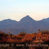 Title:   Dawn Over the Desert<br /> <br /> Comments: This is where I learned to do sun salutations. <br /> <br /> Location: Grapevine Hills, Big Bend National Park