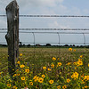 Title: Profusion<br /> <br /> Comments:<br /> <br /> Location: Hill Country