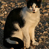 Title:   Sunrise Cat<br /> <br /> Comments: <br /> <br /> Location: Katy