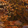 Title:   Should You Suppose, In Leafy Repose <br /> <br /> Comments:  McKittrick Canyon in the fall is the most beautiful place in Texas, bar none.<br /> <br /> Location: McKittrick Canyon
