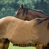Title:   So I Saw this Really Cute Filly Over By The ... Ssshhh ... Photographer!<br /> <br /> Comments: <br /> <br /> Location: Maydelle