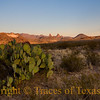"Title:   What Makes the Desert Beautiful is that Somewhere it Hides a Well<br /> <br /> Comments: I usually see the Mule Ear peaks from above, along the South Rim trail in the Chisos Mountains. But this time I was seeking a different angle, another perspective.   And I  thought ""this prickly pear has a nice view.""<br /> <br /> Location: Big Bend"