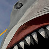 Title:   Land Shark<br /> <br /> Comments: <br /> <br /> Location: Port Aransas