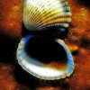 Title:   Sunday Shells<br /> <br /> Comments: <br /> <br /> Location: Matagorda Island