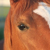 Title:   Do You See What I See?<br /> <br /> Comments: Daisy is an old friend's horse.  She's a great horse, actually. Even tempered and very teachable. <br /> <br /> Location: Katy, Texas