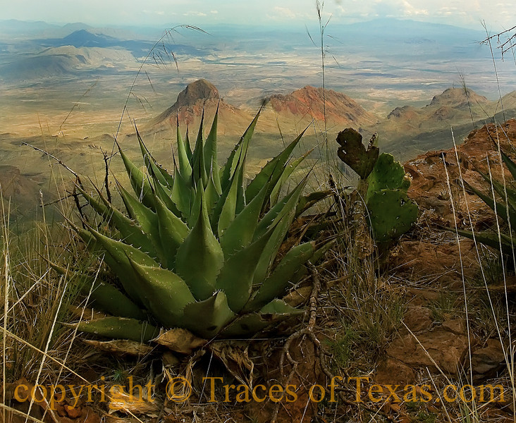 Title: The Desert is Filled with All Kinds of Ways to Kill a Man<br /> <br /> Comments: Drought, rocks, agave, prickly pear, 2,500 foot vertical drops ....  just about anything can get you in the desert. <br /> <br /> Location: Big Bend National Park