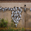Title:   Hook 'Em!<br /> <br /> Comments: Cow skulls are a dominant decorating motif in Texas. I reckon it's probably because dead cows are so plentiful hereabouts.   Nevertheless, I always think about the first guy to put a cow skull on his wall and what his friends must have said when they saw it. <br /> <br /> Location: Marathon
