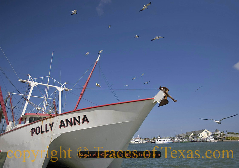 Title:   Seagull Tailgate Party<br /> <br /> Comments: <br /> <br /> Location: Port Aransas