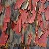 Title:   If I Could Turn Back Time<br /> <br /> Comments: Peeling paint on a friend's old barn.  I've been mocking it for years. <br /> <br /> Location: Academy