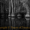 Title: From the Faraway Nearby<br /> <br /> Comments: Wouldn't you love to be here?<br /> <br /> Location: Caddo Lake