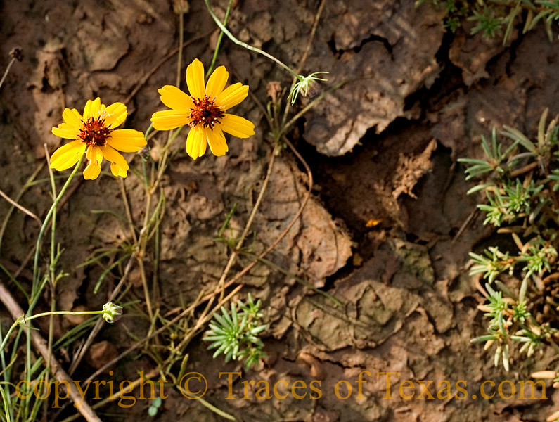 Title: Texas is for Lovers<br /> <br /> Comments:<br /> <br /> Location:  Fredericksburg